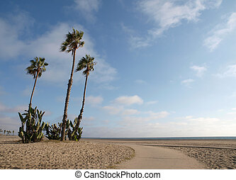California Beach Palms - Sand, sun and palm trees grace a...