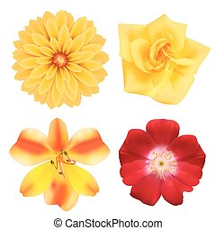 Set of flowers Photo-realistic vector illustration