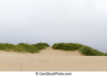 sand dune landscape on the coast