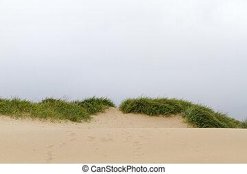 sand dune landscape on the coast