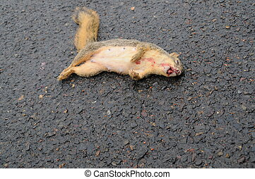 Dead squirrel on wet road with blood on mouth
