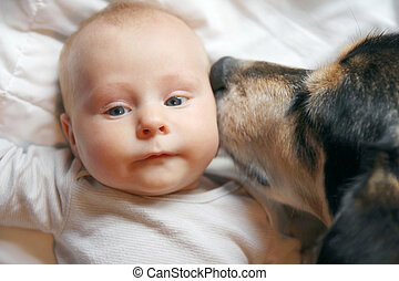 Pet Dog Kissing Two Month Old Baby - A friendly family...