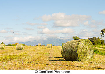 Landscape of hay bales. - Landscape of hay bales unwrapped.
