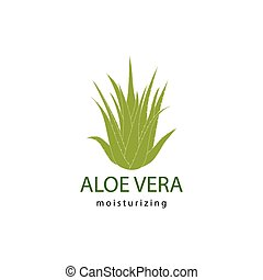 aloe vera - vector illustration of green aloe vera plant
