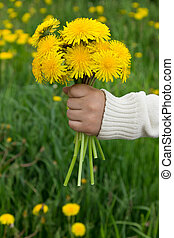 Bouquet in a child's hand - Bouquet of yellow dandelions in...