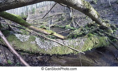 wild brook in forest - Wild brook stream water flow and...