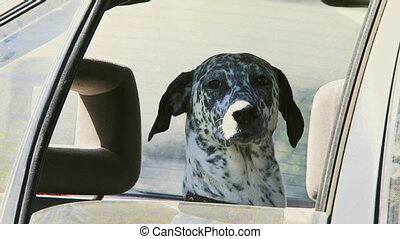 Dog in the car.