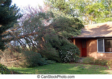 Fallen tree on house - A that fell on a house.