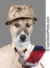 Funny Doggy. - Funny looking doggy wearing hat and tie with...