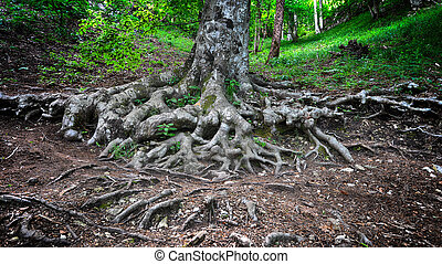 tree roots  in spring green forest