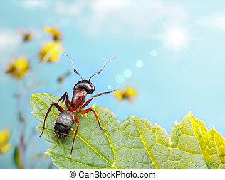 garden ant catching sun beam, sitting on leaf in the garden