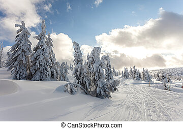Deep snow - Winter landscape - snow covered trees Selective...