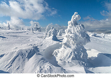 Deep snow. - Winter landscape - snow covered trees....