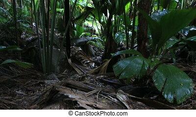 Vallee De Mai palm forest in Praslin - Vallee de Mai Nature...