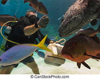 Diver Hand Feeding Fish on reef floor Great Barrier Reef...