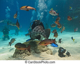 Diver Feeding Fish on Great Barrier Reef
