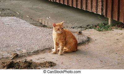 Feral Orange Tabby Cat sitting near metal fence