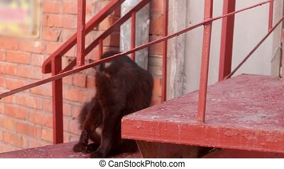 Black cat licking on a red staircase