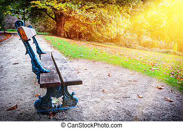 Lonely bench in autumn city park