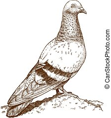 engraving illustration of dove - Vector engraving drawing...