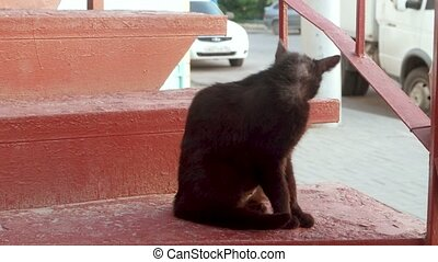 Back of Black cat licks  on a red staircase