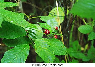 acai, berries