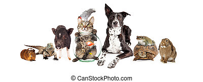 Group of Domestic Pets Sitting Together - Large group of...