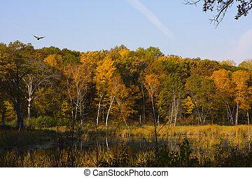 Autumn Landscape. - Autumn Landscape with earth tone colors.