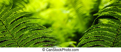 Green leaves of fern - Close-up of beauty green leaves of...