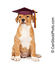 Puppy Obedience School Graduate