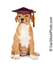 escuela, perrito, obediencia, graduado