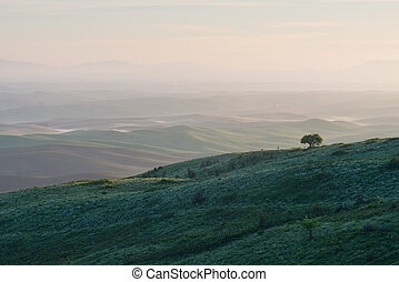 Lone tree on a ridge, Steptoe Butte State Park, Oakesdale,...