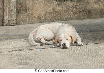 Homeless dog tired  - Homeless dog sleep on dirty street