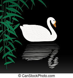 Swan illustration - Beautiful swan vector illustration White...