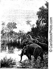 The elephants came to drink, vintage engraving. - The...