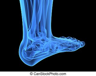 human foot - 3d rendered x-ray illustration of a human...