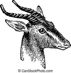 Gazelle, vintage engraving - Gazelle, vintage engraved...