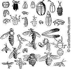 Insects from the Miocene period found in a fossil state,...