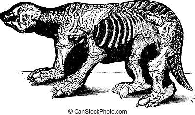 Skeleton of Megatherium, vintage engraving.