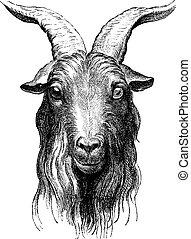 Goat, vintage engraving. - Goat, vintage engraved...