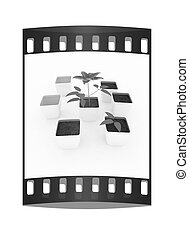 Clematis a beautiful flower in the white pot. The film strip