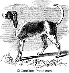 Hunting dog, vintage engraving - Hunting dog, vintage...