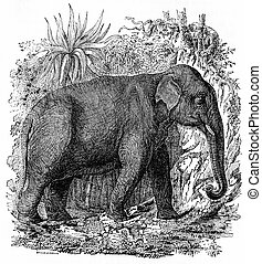 Elephant in India, vintage engraving. - Elephant in India,...