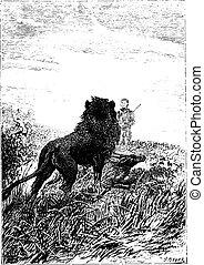 Lion watching Dick Sand, vintage engraving.
