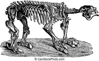 Megatherium, vintage engraving.