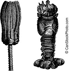 Fig.275. Echinoderms and Crinoids, Fig. 276. Crustaceans...