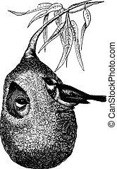 Penduline Tit and nest, vintage engraving. - Penduline Tit...