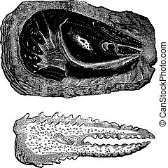 Crustaceans of the Triassic era, Raw crayfish and claws,...