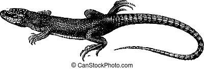 Green lizard, vintage engraving.