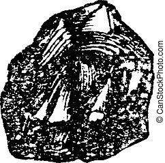 Barnacle, vintage engraving. - Barnacle, vintage engraved...